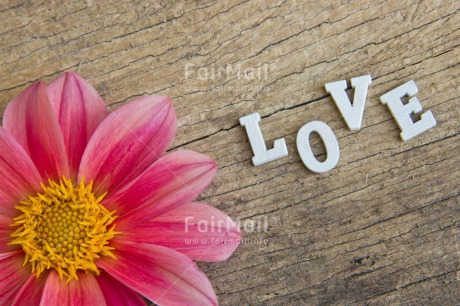 Fair Trade Photo Colour image, Flower, Letters, Love, Peru, Pink, South America, Text, Valentines day, Wood