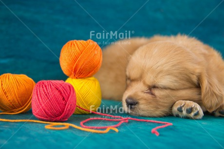 Fair Trade Photo Activity, Animals, Blue, Colour image, Colourful, Cute, Dog, Friendship, Horizontal, Lying, Multi-coloured, Peru, Puppy, Sleeping, Sorry, South America, Wool