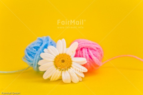Fair Trade Photo Ball of yarn, Birth, Blue, Boy, Colour image, Daisy, Flower, Girl, Horizontal, New baby, People, Peru, Pink, South America, Yellow