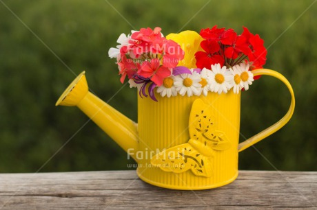 Fair Trade Photo Butterfly, Colour image, Flower, Horizontal, Mothers day, Peru, South America, Thank you, Watering can