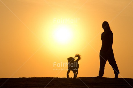 Fair Trade Photo Animals, Care, Colour image, Dog, Friendship, Holiday, Horizontal, Love, One girl, People, Peru, Shooting style, Silhouette, South America, Summer, Sunset, Travel