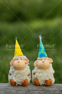 Fair Trade Photo Animals, Birthday, Friendship, Hat, Invitation, Party, Sheep, Together
