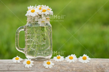 Fair Trade Photo Colour image, Daisy, Flower, Flowers, Glass, Good luck, Grass, Green, Horizontal, Outdoor, Peru, Seasons, Sorry, South America, Spring, Success, Summer, Thank you, White