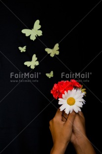Fair Trade Photo Black, Butterfly, Colour image, Condolence/Sympathy, Flowers, Gift, Hands, Holding, Indoor, People, Peru, Red, South America, Studio, Vertical, White