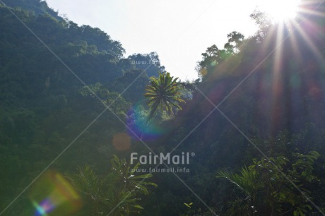 Fair Trade Photo Colour image, Day, Forest, Green, Nature, Outdoor, Peace, Peru, South America