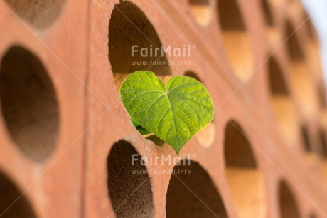 Fair Trade Photo Brick, Colour image, Fathers day, Friendship, Green, Heart, Horizontal, Love, Marriage, Mothers day, Outdoor, Peru, Plant, South America, Valentines day, Wedding