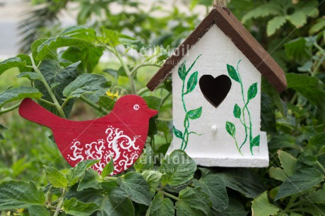 Fair Trade Photo Animals, Bird, Colour image, Heart, Horizontal, House, Love, New home