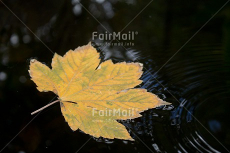 Fair Trade Photo Autumn, Colour image, Condolence/Sympathy, Horizontal, Leaf, Peru, Seasons, South America, Water