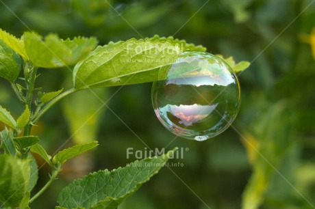 Fair Trade Photo Colour image, Dreaming, Flower, Horizontal, Nature, Peru, Soapbubble, South America, Transparency, Water