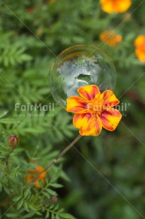 Fair Trade Photo Colour image, Dreaming, Flower, Nature, Peru, Soapbubble, South America, Transparency, Vertical, Water