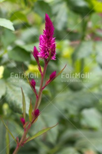 Fair Trade Photo Closeup, Colour image, Flower, Nature, Peru, Shooting style, South America, Vertical