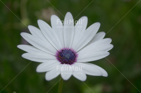Fair Trade Photo Colour image, Flower, Horizontal, Nature, Peru, South America