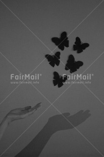 Fair Trade Photo Artistique, Black and white, Butterfly, Condolence/Sympathy, Get well soon, Peru, Shadow, Shooting style, South America, Vertical