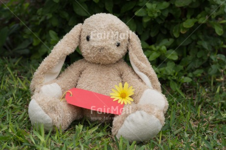 Fair Trade Photo Animals, Colour image, Cute, Flower, Friendship, Horizontal, Mothers day, Peru, Rabbit, South America, Thank you, Valentines day