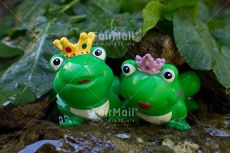 Fair Trade Photo Animals, Colour image, Frog, Funny, Horizontal, Love, Marriage, Nature, Peru, South America, Together, Wedding