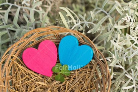 Fair Trade Photo Blue, Christmas, Clover, Colour image, Easter, Fathers day, Green, Heart, Horizontal, Love, Mothers day, Nest, New baby, Outdoor, Peru, Pink, Seasons, Snow, South America, Spring, Summer, Valentines day, White, Winter