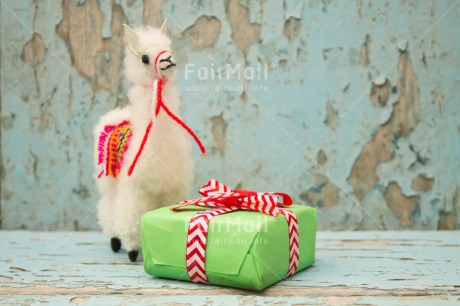 Fair Trade Photo Activity, Animals, Birthday, Celebrating, Colour image, Gift, Horizontal, Indoor, Llama, Peru, South America, Thank you
