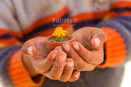 Fair Trade Photo Child, Colour image, Day, Fathers day, Flower, Friendship, Hands, Holding, Horizontal, Love, Mothers day, Nature, Outdoor, Peru, Plant, Pot, Rural, Seasons, Sorry, South America, Spring, Thank you, Yellow