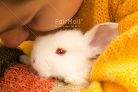 Fair Trade Photo Activity, Animals, Brother, Colour image, Easter, Friendship, Horizontal, Hug, Hugging, Love, Peru, Rabbit, Sister, South America, White