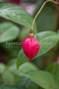 Fair Trade Photo Colour image, Condolence/Sympathy, Drop, Flower, Grass, Green, Love, Nature, Outdoor, Peru, Rain, Red, South America