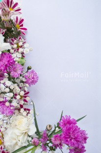 Fair Trade Photo Colour image, Colourful, Fathers day, Flowers, Marriage, Mothers day, Peru, Pink, Seasons, Sorry, South America, Spring, Thank you, Valentines day, Vertical, Wedding, White