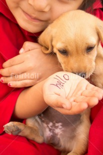 Fair Trade Photo Animals, Child, Colour image, Dog, Friendship, Girl, Greeting, Hands, People, Peru, Puppy, Red, South America, Thinking of you, Vertical