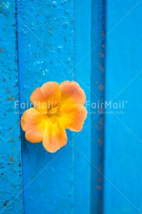 Fair Trade Photo Blue, Colour image, Contrast, Door, Fathers day, Flower, Friendship, Love, Mothers day, Peru, Sorry, South America, Thank you, Valentines day, Vertical, Yellow