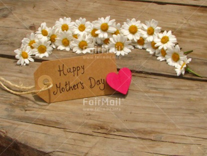 Fair Trade Photo Card, Colour image, Daisy, Desk, Fathers day, Flowers, Good luck, Heart, Horizontal, Love, Message, Mothers day, Peru, Red, Sorry, South America, Table, Thank you, Valentines day, White, Wood