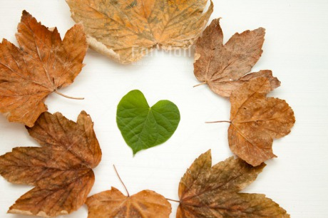 Fair Trade Photo Autumn, Colour image, Fathers day, Green, Heart, Indoor, Leaf, Love, Marriage, Mothers day, Nature, Peru, Seasons, South America, Studio, Valentines day, Wedding