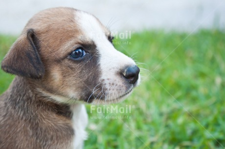 Fair Trade Photo Animals, Colour image, Cute, Dog, Grass, Horizontal, One, One dog, Outdoor, People, Peru, Puppy, South America