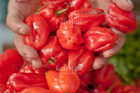 Fair Trade Photo Colour image, Food, Food and alimentation, Hand, Horizontal, Pepper, Peru, Red, South America, Tarapoto travel. market