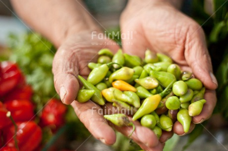 Fair Trade Photo Colour image, Food, Food and alimentation, Green, Hand, Horizontal, Pepper, Peru, South America, Tarapoto travel. market