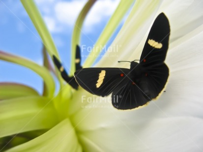 Fair Trade Photo Activity, Animals, Artistique, Black, Blue, Butterfly, Colour image, Condolence/Sympathy, Flower, Flying, Horizontal, Insect, Nature, Peru, Plant, Sky, South America
