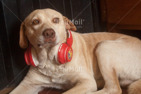 Fair Trade Photo Activity, Animals, Colour image, Dog, Funny, Horizontal, Music, Peru, Relaxing, South America