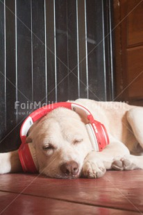 Fair Trade Photo Activity, Animals, Colour image, Dog, Funny, Music, Peru, Relaxing, South America, Vertical