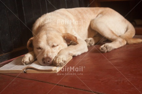 Fair Trade Photo Activity, Animals, Book, Colour image, Dog, Education, Exams, Funny, Horizontal, Peru, Reading, Relaxing, South America