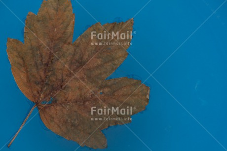 Fair Trade Photo Autumn, Colour image, Condolence/Sympathy, Horizontal, Leaf, Peru, Seasons, South America