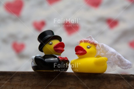 Fair Trade Photo Animals, Colour image, Duck, Horizontal, Love, Marriage, Peru, South America, Together, Wedding
