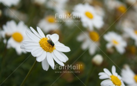 Fair Trade Photo Animals, Closeup, Colour image, Flower, Fly, Horizontal, Insect, Peru, Shooting style, South America