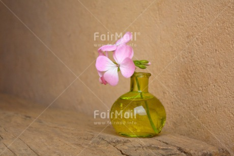 Fair Trade Photo Colour image, Fathers day, Flower, Glass, Green, Horizontal, Love, Mothers day, Peru, Pink, Sorry, South America, Thank you, Valentines day, Vase, Wood