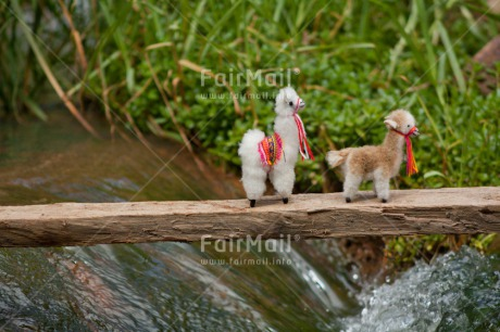 Fair Trade Photo Activity, Animals, Bride, Brown, Colour image, Couple, Horizontal, Llama, Nature, Peru, River, South America, Together, Walking, Water, White