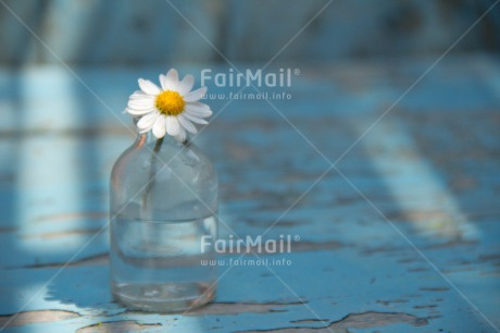Fair Trade Photo Blue, Bottle, Colour image, Daisy, Day, Fathers day, Flower, Glass, Horizontal, Indoor, Light, Love, Mothers day, Peace, Peru, South America, Sunshine, Valentines day, Vintage