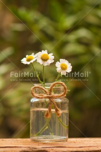 Fair Trade Photo Colour image, Condolence/Sympathy, Daisy, Day, Fathers day, Flower, Friendship, Gift, Glass, Love, Marriage, Mothers day, Nature, Outdoor, Peru, Plant, Ribbon, Rope, Seasons, Sorry, South America, Spring, Thank you, Valentines day, Vertical, Wedding, White