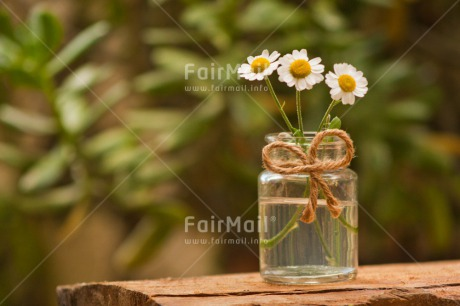 Fair Trade Photo Colour image, Condolence/Sympathy, Daisy, Day, Fathers day, Flower, Friendship, Gift, Glass, Horizontal, Love, Marriage, Mothers day, Nature, Outdoor, Peru, Plant, Ribbon, Rope, Seasons, Sorry, South America, Spring, Thank you, Valentines day, Wedding, White