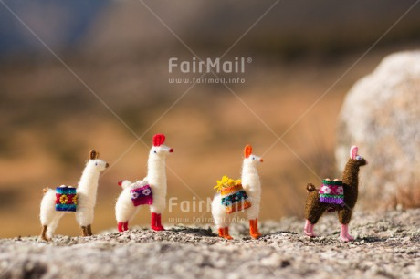 Fair Trade Photo Activity, Animals, Colour image, Colourful, Day, Flower, Friendship, Group, Holiday, Horizontal, Llama, Mountain, Multi-coloured, Nature, Outdoor, Peru, Seasons, South America, Stone, Summer, Team, Together, Toy, Travel, Travelling, Walking, Winter