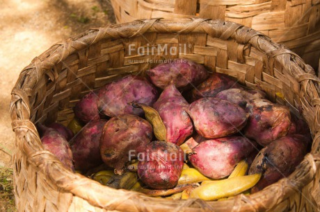 Fair Trade Photo Basket, Colour image, Day, Food and alimentation, Horizontal, Mountain, Outdoor, Peru, Potatoe, Rural, South America