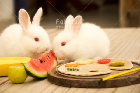 Fair Trade Photo Activity, Animals, Brother, Colour image, Couple, Easter, Eating, Food and alimentation, Fruits, Horizontal, Love, Peru, Rabbit, Sister, South America, Together, Valentines day, Watermelon, White
