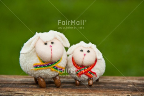 Fair Trade Photo Animals, Brother, Colour image, Couple, Fathers day, Friendship, Grass, Green, Love, Marriage, Mothers day, Nature, Outdoor, Peru, Sheep, Sister, South America, Valentines day, White