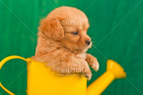 Fair Trade Photo Animals, Colour image, Contrast, Cute, Dog, Friendship, Funny, Green, Horizontal, Peru, Puppy, South America, Watering can, Yellow