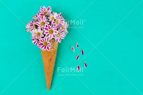 Fair Trade Photo Birthday, Colour image, Fathers day, Flower, Food and alimentation, Friendship, Horizontal, Ice cream, Love, Mothers day, Peru, Seasons, South America, Spring, Summer, Valentines day